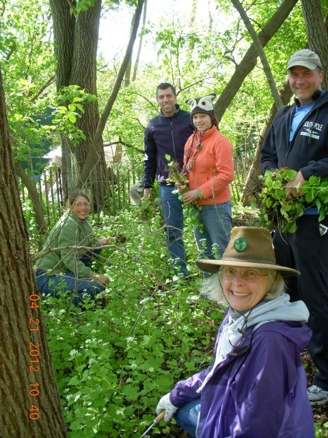 Glenway Restoration Project regulars and DMNA volunteers pull a patch of garlic mustard in the project's new woodland garden.  Photo by Sandy Stark.