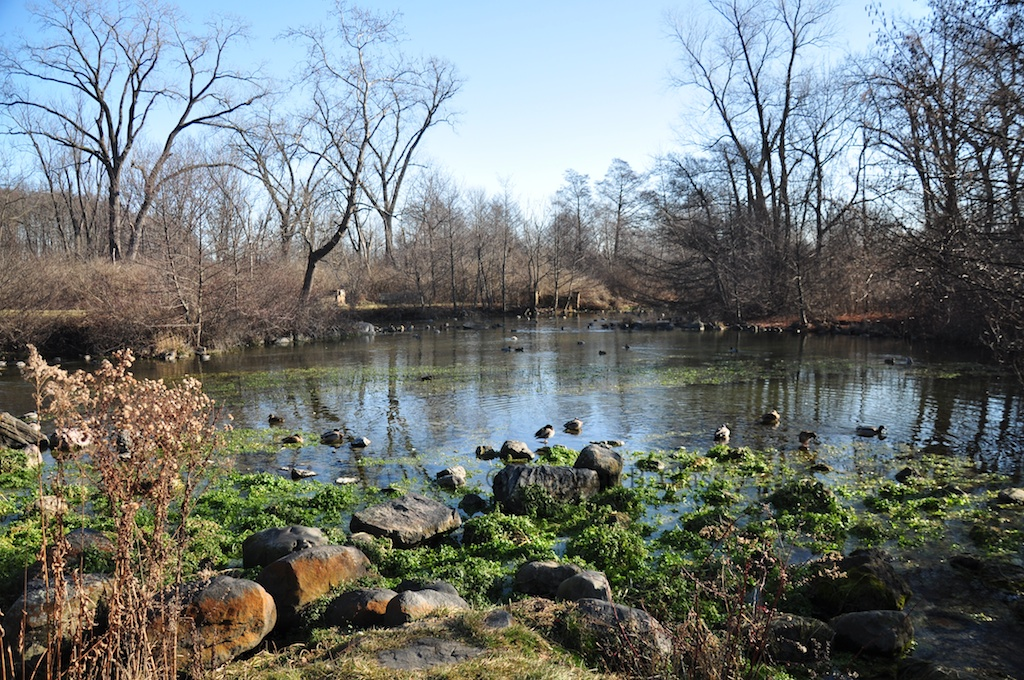 This image has an empty alt attribute; its file name is duck-pond-springs1.jpg