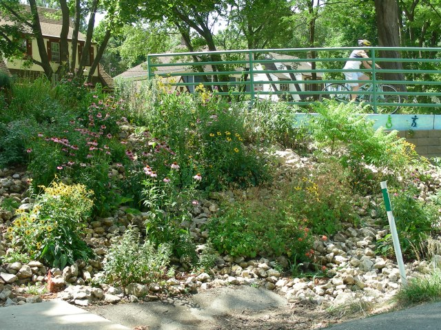 The community-based restoration as it looked in July, 2012.  It took a lot of water to keep it this green.  Photo by Jacob Blasczyk.