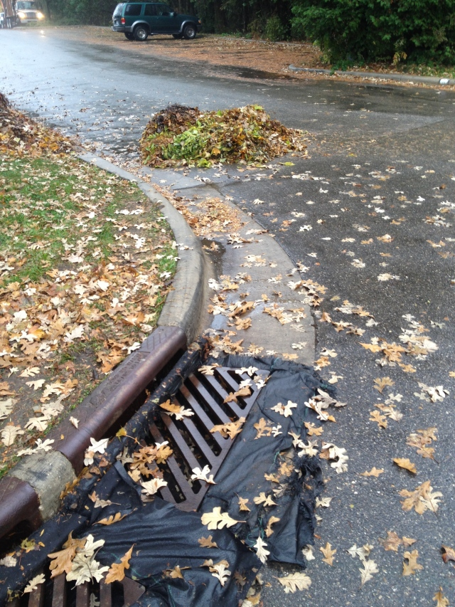 Leaves headed for the storm drain at Wingra Park.