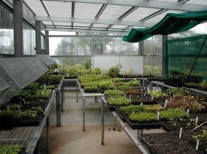 TREAT tree seedling nursery.