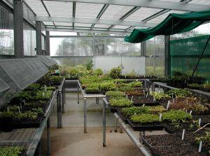 TREAT tree seedling nursery.