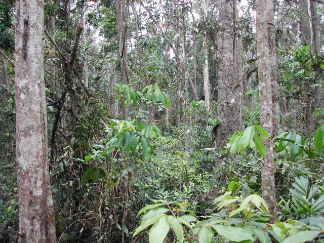 Tropical rainforest remnant.