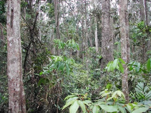 Tropical rainforest remnant.