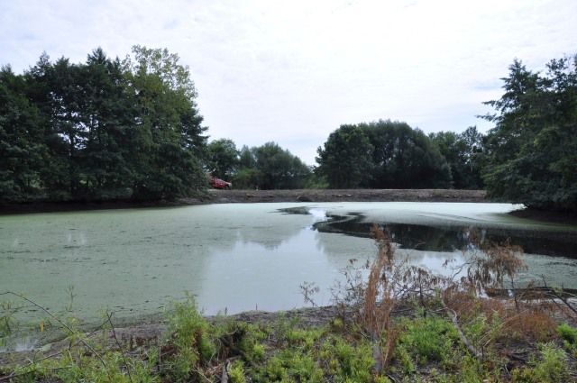 Typical storm water pond on Monroe Street in Madison.