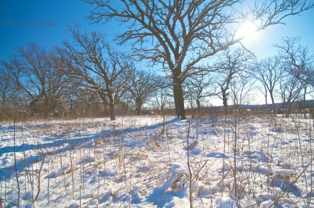 On the eve of the Winter Solstice on the restored Wingra Oak Savanna.
