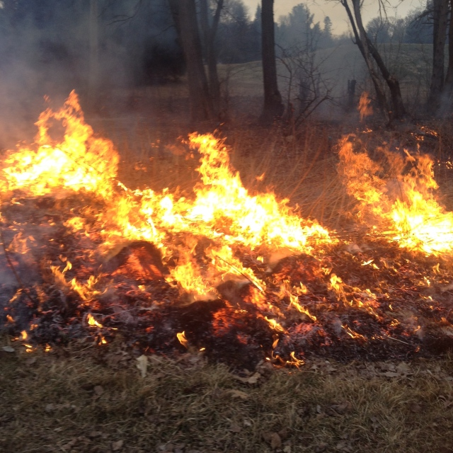 Unseasonably cool weather  delayed the start of the 2014 burn season which usually gets underway in late March.  This was the first prescribed management burn of the season in the watershed.  Photo by Steve Glass.