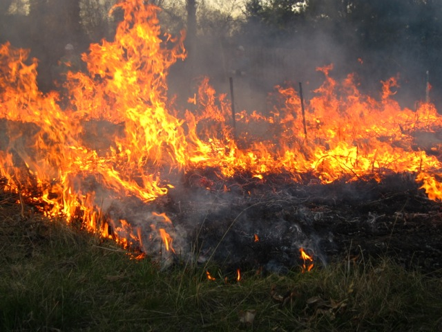The art of prescribed fire.  Photo by Susan Slapnick.