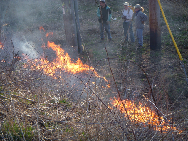 Part of the burn crew monitoring fire behavior on the south flank.  Photo by Sandy Stark.