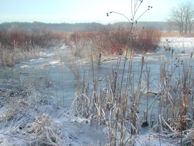 Curtis Prairie on a frosty morning under a late winter snow cover.