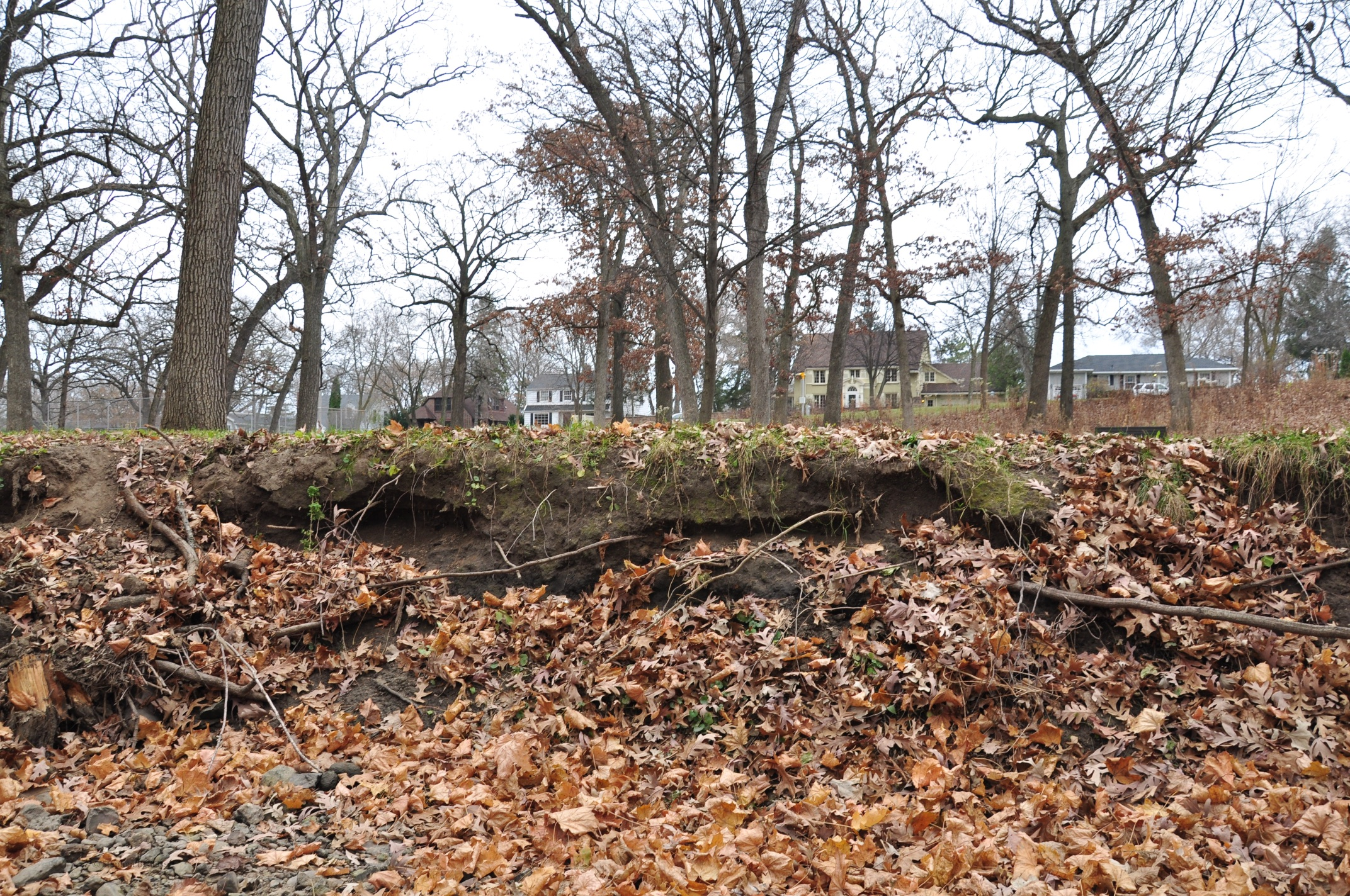 Autumn Rain In Wingra Park >> Wingrasprings Conservation And Urban Restoration Ecology A