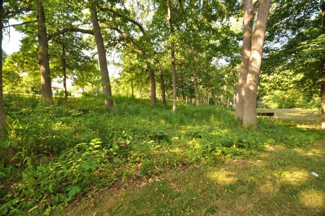 Oak savanna planting in Nakoma Park.