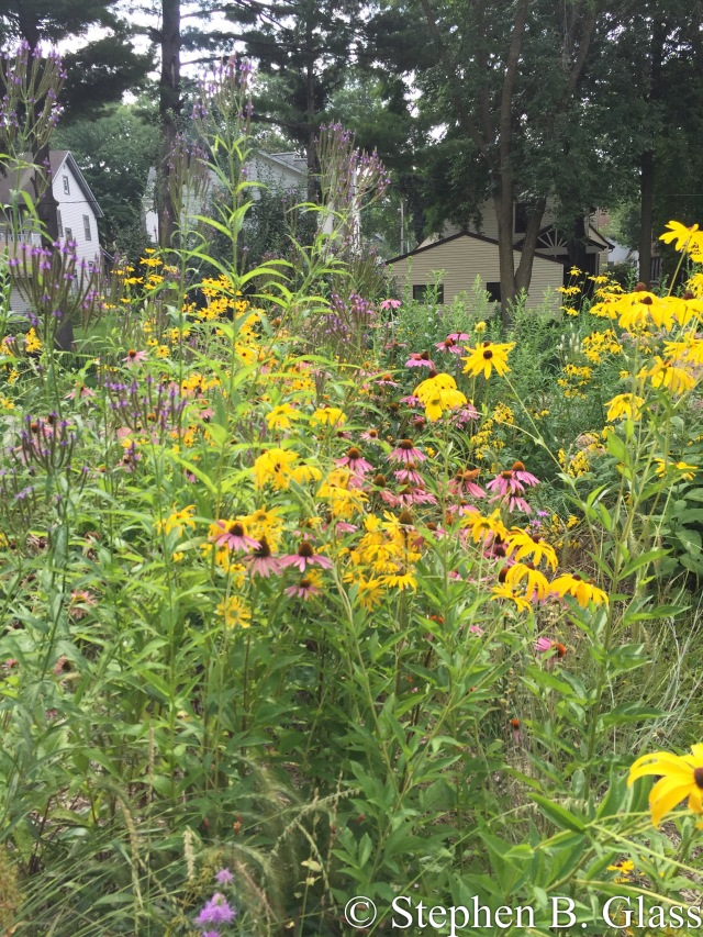 The bee and butterfly garden at Commonwealth Avenue and the SW Bike Path.