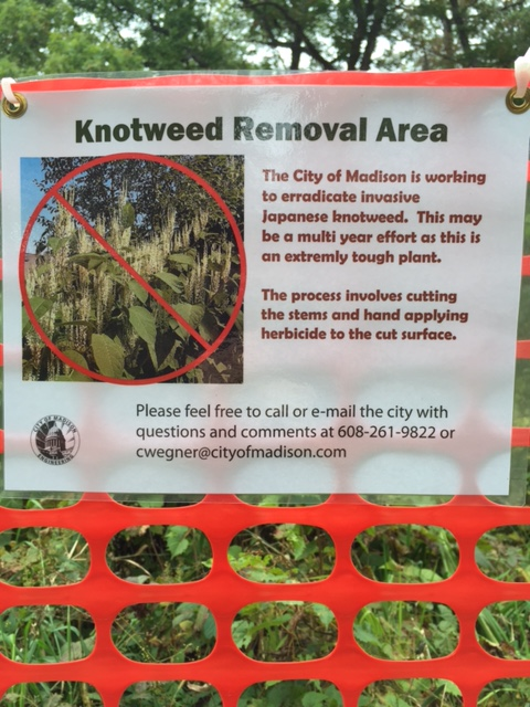 Informational sign announcing the City's multi-year effort to eradicate Japanese knotweed.