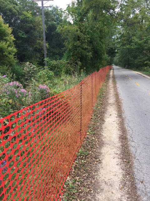 The area where a chemical was applied to the knotweed was fenced off to protect the public.