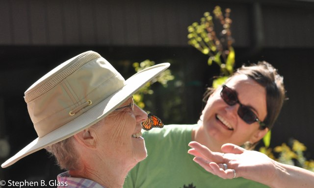 Upon release, a netted and tagged monarch kisses a visitor before heading south on its flight to Mexico.