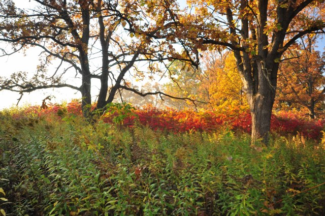 "04 Steve Glass ""Fall in the Arboretum"""