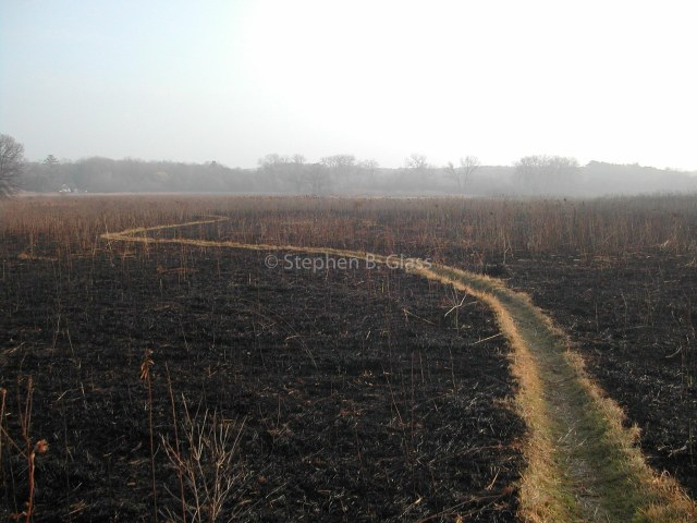 After a prescribed burn of Curtis Prairie in the UW-Madison Arboretum