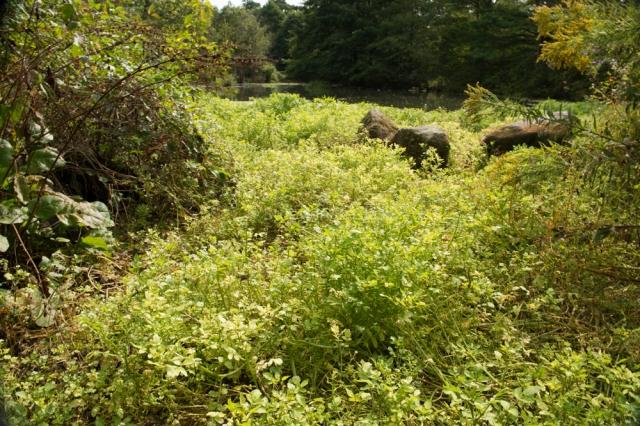 Duck Pond Springs.