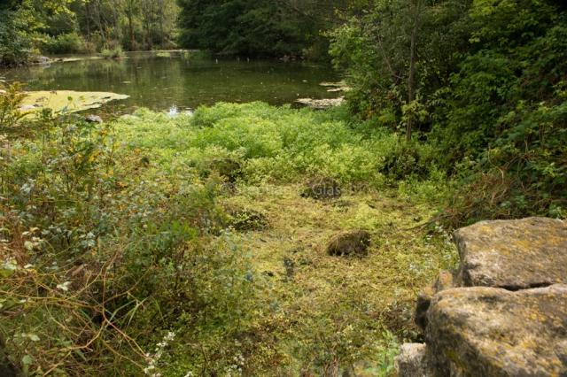 Lake Wingra Duck Pond Springs in the UW-Madison Arboretum