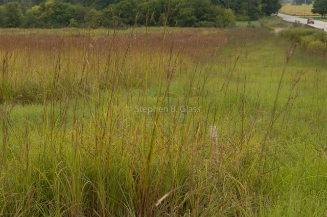 The prairie at Taylor University in Upland, Indiana.