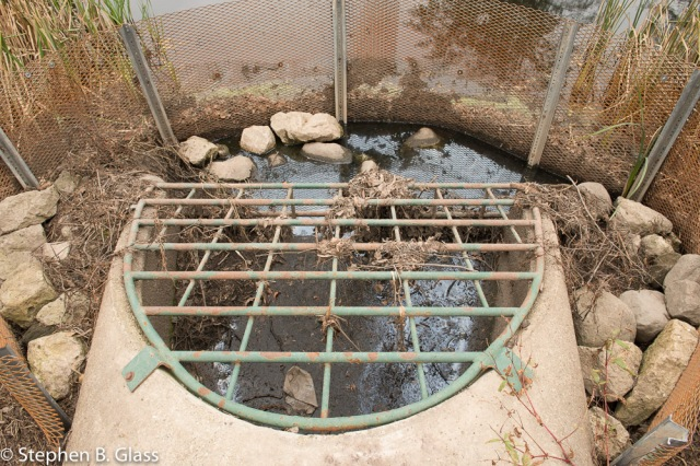 One of two storm water outlets in Pond #5 that direct storm water into the UW-Madison Arboretum's West Marsh.