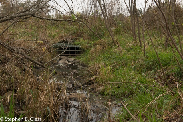 Storm water flowing into West Marsh, traditionally a nesting site for a pair sandhill cranes.