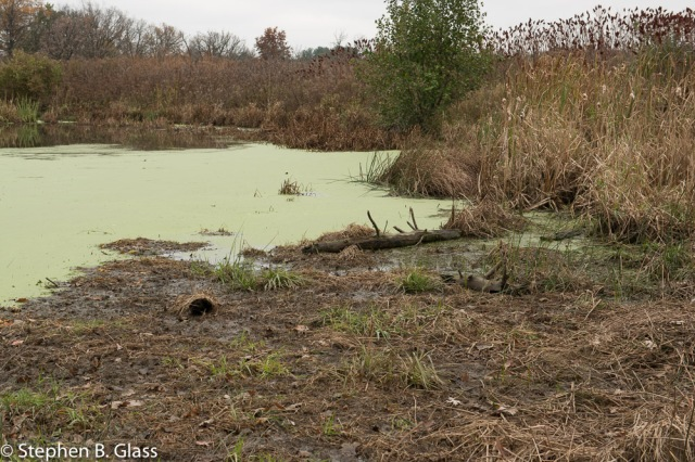 A small wetland delta has formed from eroded soil has developed in the past 20 years.
