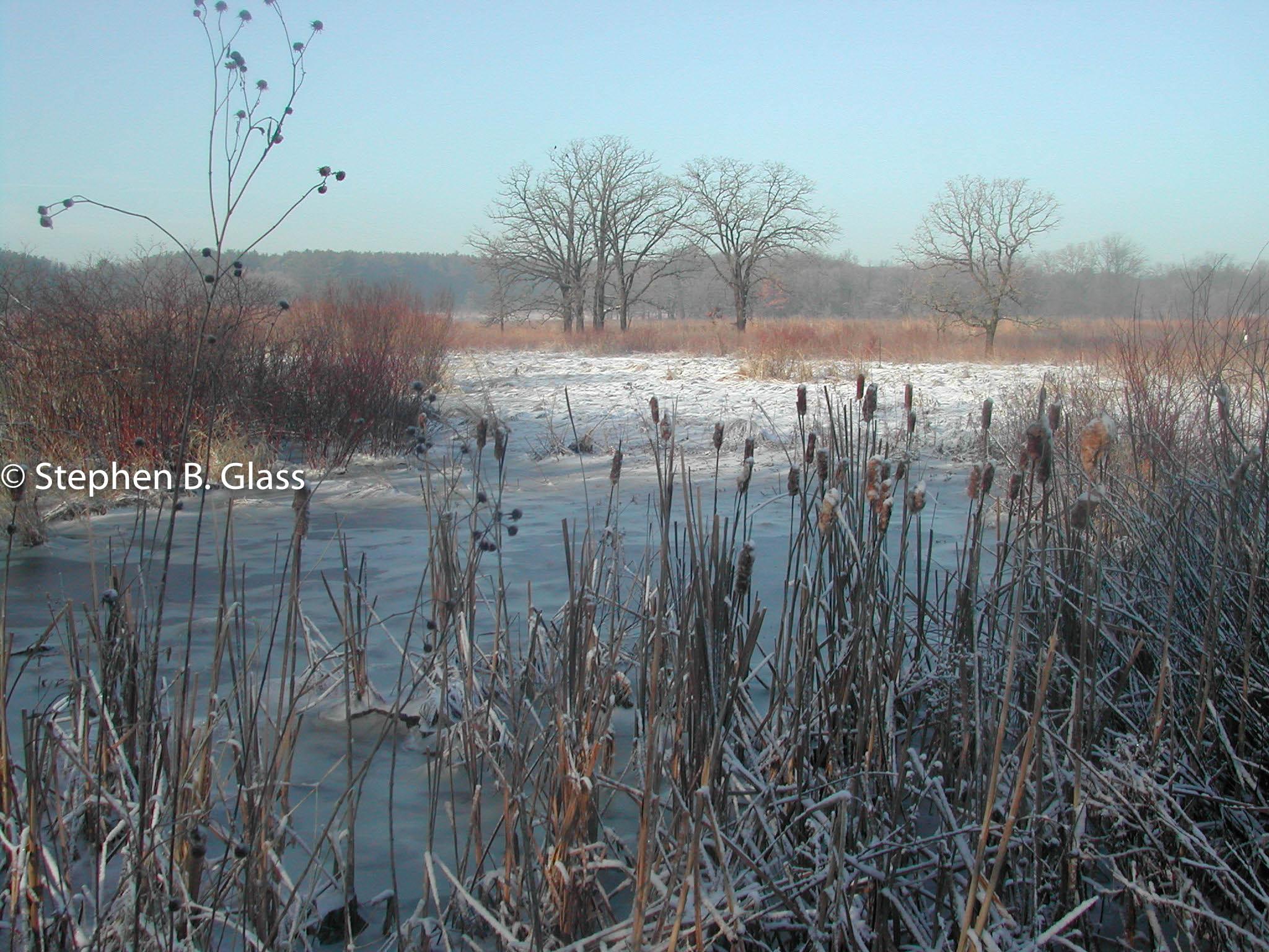 Walking By Wingra Creek In Snow >> Images Of Winter On The Prairie Wingrasprings